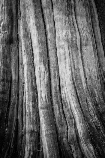 Full Frame Backgrounds Close-up No People Tree Textured  Tree Trunk Pattern Trunk Plant Wood - Material Rough Nature Day Outdoors Natural Pattern Growth Brown Detail Wood Textured Effect Wood Grain