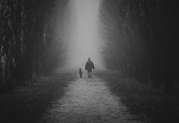 Man Walking A Dog On A Tree-Lined Road