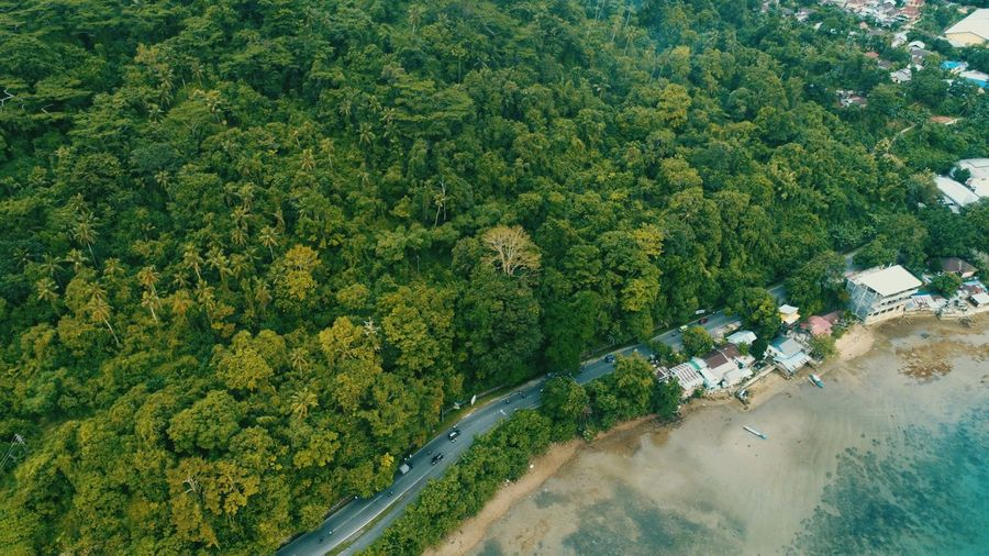 High angle view of trees by swimming pool in forest