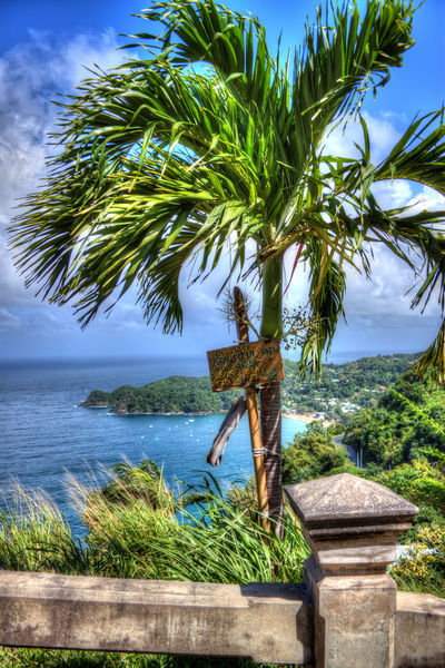 Sea Scenics Horizon Over Water Beauty In Nature Water Palm Tree Nature Beach Tranquility Tree No People Tranquil Scene Outdoors Day Sky Single Tree Castara Bay Tobago Framing The View Cloud - Sky Fishing Village Vacations Nature