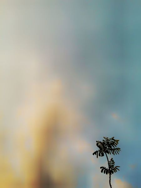 Minimalism Sky Tree Low Angle View Nature No People Copy Space Tranquility Beauty In Nature Plant Cloud - Sky Outdoors Day Growth Focus On Foreground Environment Branch Scenics - Nature Treetop