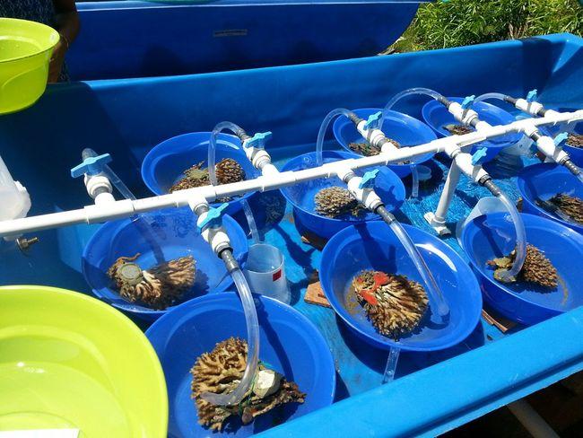 Aloha World Hello World Coconut Island Gilligan's Island Marine Biology Coralreef Research