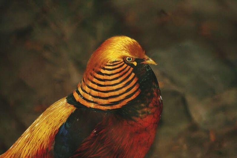 Taking Photos Selective Focus 43 Golden Moments Day Fauna golden bird