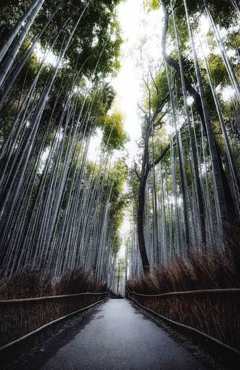 Bamboo park Travel Japan Kyoto Plant Tree No People Nature Day Transportation Growth Outdoors Road The Way Forward Architecture Wet Direction Sky Sunlight City Beauty In Nature Full Frame Water Low Angle View My Best Photo My Best Photo