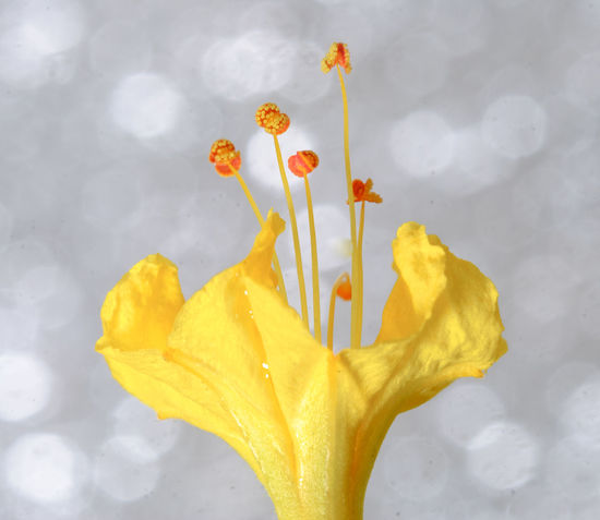 minimalism Beauty In Nature Blooming Blossom Botany Close-up Day Flower Flower Head Focus On Foreground Fragility Freshness Growth Gunbir In Bloom Nature Outdoors Petal Plant Pollen Season  Sky Stamen Stem Weather Yellow
