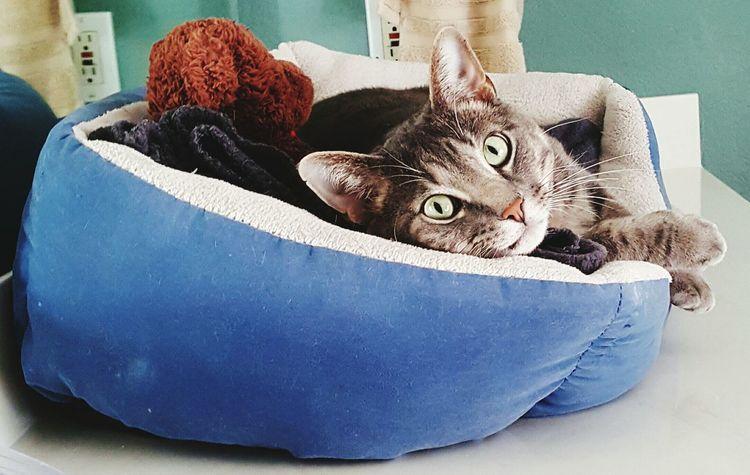 Cat Content Relaxing Cat Life