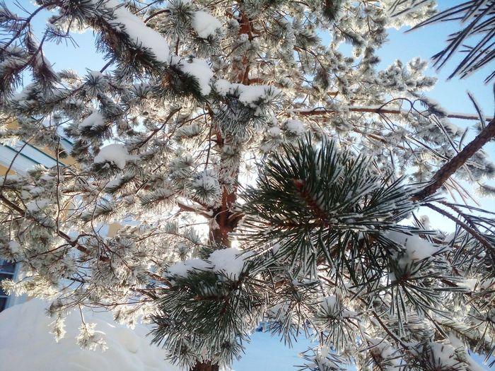 Колется Winter