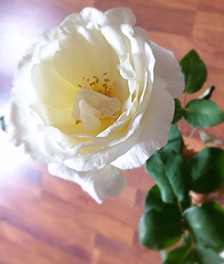 Flower. September. Beauty. Rose. Taking Photos Hanging Out Enjoying Life Hello World
