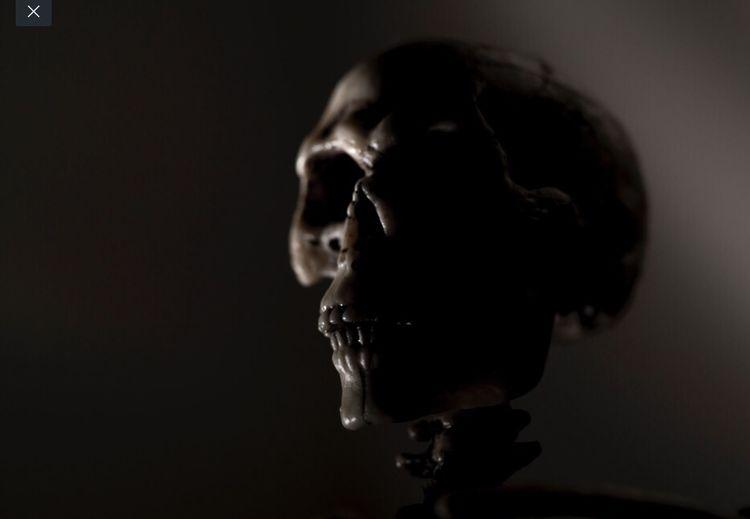 Skull close