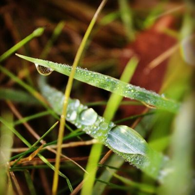 RainDrop Grass Meadow