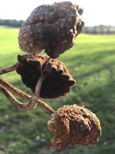 Focus On Foreground Nature Close-up Field Outdoors Growth Day Plant No People Beauty In Nature Pine Cone Food Fragility Freshness Plant Pod Mushrooms