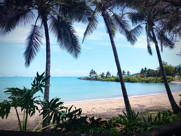 Sea Palm Tree Tree Water Beauty In Nature Sky Nature Scenics Horizon Over Water Beach Growth Tranquil Scene Tree Trunk Tranquility No People Outdoors Day Nautical Vessel Palm Frond