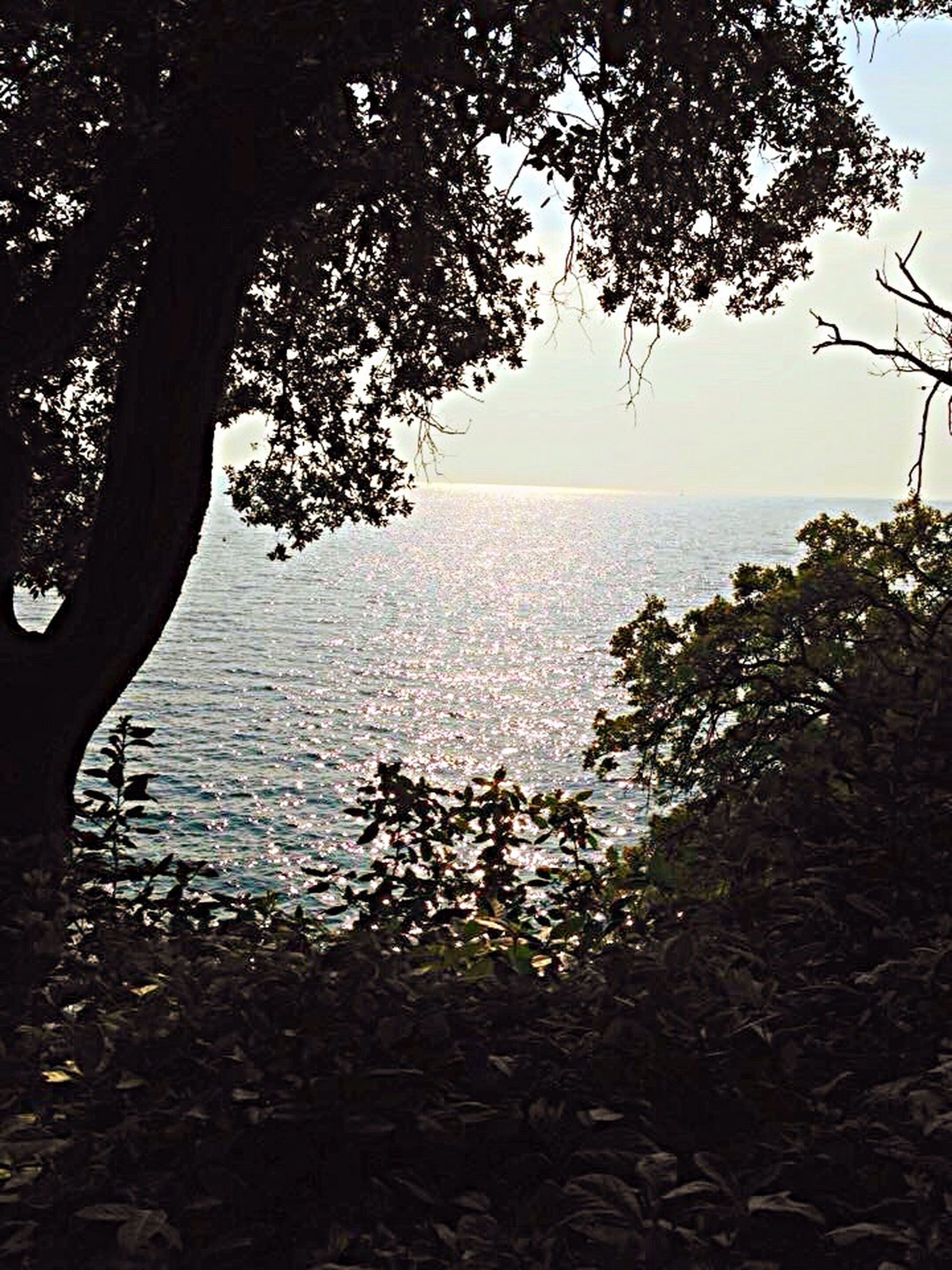 horizon over water, water, tree, sea, tranquil scene, tranquility, branch, scenics, beauty in nature, nature, growth, sky, clear sky, idyllic, tree trunk, beach, shore, outdoors, no people, calm