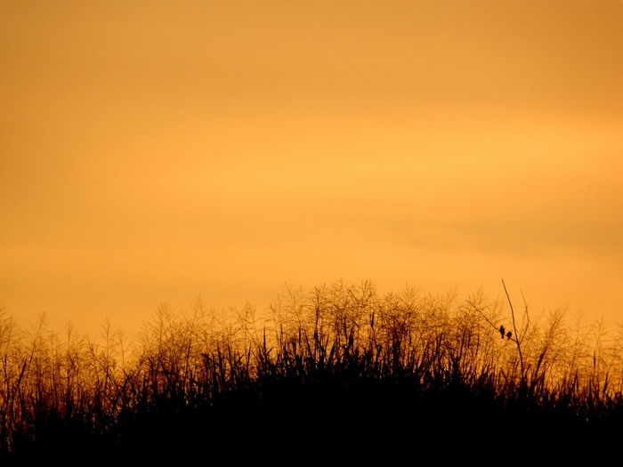 The Great Outdoors - 2017 EyeEm Awards Sunset Silhouette No People Nature Beauty In Nature Tree Sky Outdoors Backgrounds Scenics Close-up Day Freshness Pixelated Lost In The Landscape