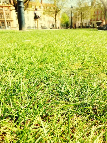 Grass Soaking Up The Sun Park Bristol Green Spring Into Spring Lemon Lime By Motorola