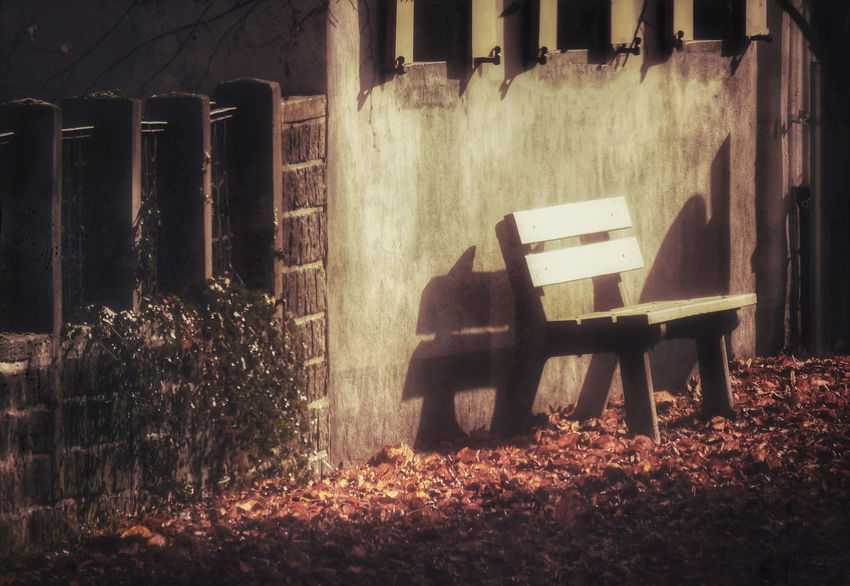 The lonely autumn Bench Autumn Winter Architecture Fineart Fine Art Fine Art Photography Seat Nature No People Chair Mammal Plant Day Built Structure Tree Outdoors One Animal Wood - Material Land Domestic Building Exterior Animal Themes Absence Domestic Animals