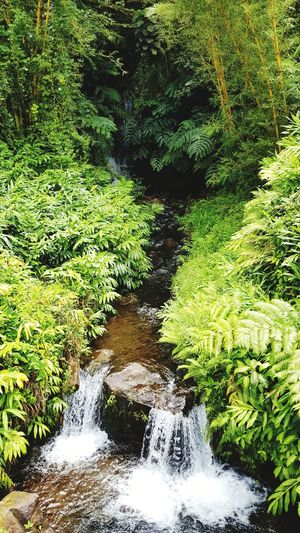 Akaka Falls Hawai'i Water Travel Big Island Water High Angle View Grass Green Color Rushing Flowing Water Tranquility Waterfall Streaming Tranquil Scene Stream - Flowing Water Falling Water Moss Power In Nature Woods