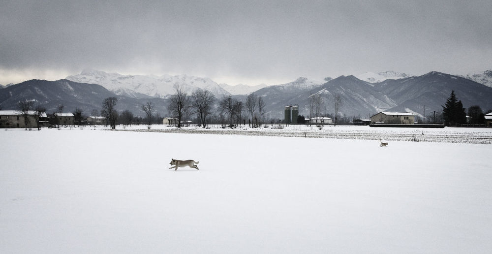 A dog runs in a snowy field at the foot of the Alps (Piedmont, Italy) Dog Mountain Cold Temperature Snow Winter Beauty In Nature Scenics - Nature Mountain Range Sky Nature Day Tranquil Scene Non-urban Scene Tranquility No People Snowcapped Mountain Landscape Environment Outdoors Animal Themes Alps Piemonte Italy EyeEm Nature Lover EyeEm Best Shots