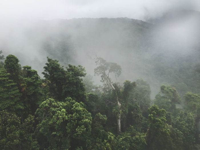 Tree Nature Fog Beauty In Nature Weather Growth Tranquility Landscape Outdoors Non-urban Scene Day Scenics Tranquil Scene No People Mist Green Color Forest Sky Hazy  Mountain Perspectives On Nature