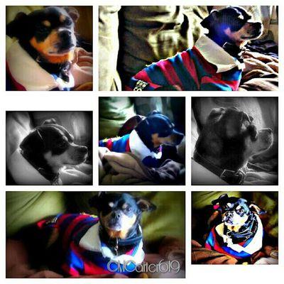 Missing my boy! Pets Dog Dogs My Dog Picframe