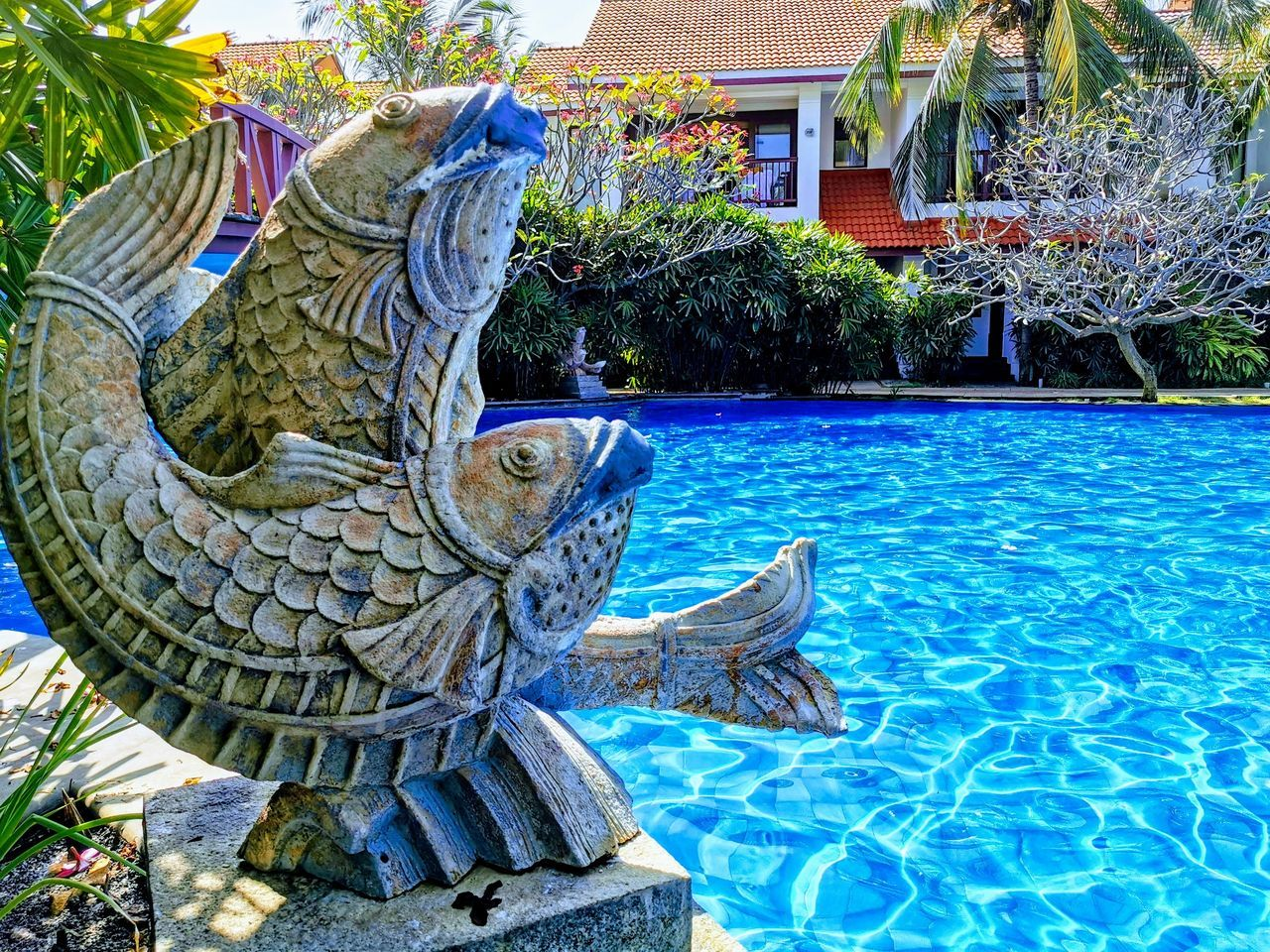 VIEW OF AN ANIMAL BY SWIMMING POOL
