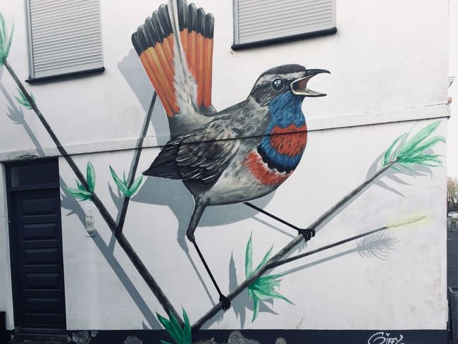 Birds Wall Streetart Street Streetphotography Paint Nature Birds Drawing Art Graffiti EyeEm Best Shots Eyeemphotography Eye4photography  Animal Animal Themes Bird Vertebrate Animal Wildlife One Animal No People Building Exterior Architecture Nature Animals In The Wild Perching Multi Colored Close-up Outdoors Built Structure