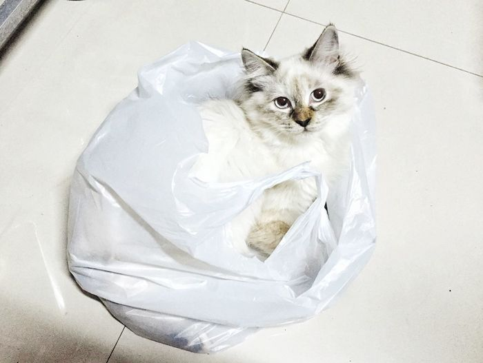 High angle view of cat in plastic bag