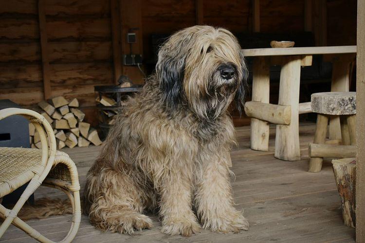 Hairy Dog Sitting Porch