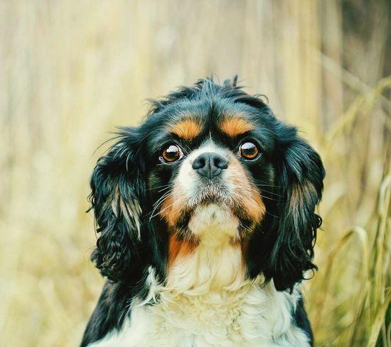 Pets Dog Pet Photography  Dog Love Köpeksevenler Köpeklerisevelim Hayvansever Hayvanlar Dog❤
