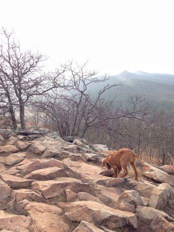 EyeEm Nature Lover The Explorer - 2014 EyeEm Awards Must Love Dogs