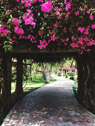 Flower Beauty In Nature Vietnam Holiday - Event Phan Thiet