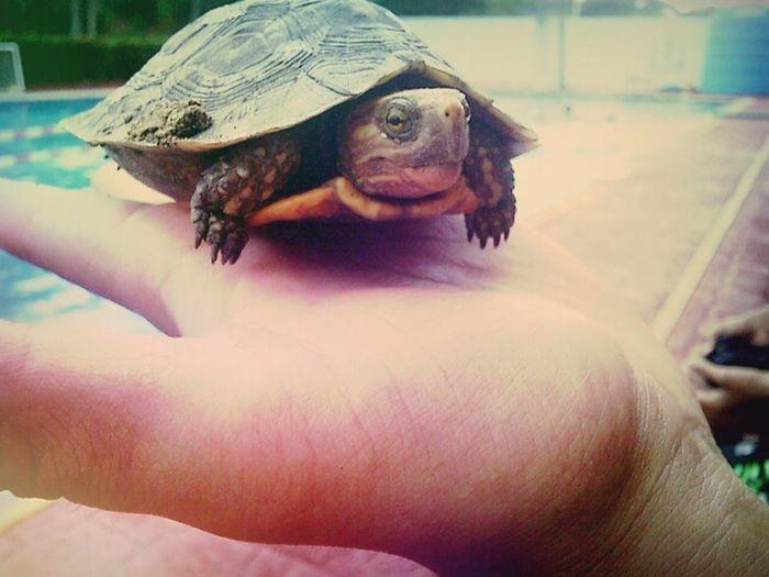 it's a Turtle Waterpool Animal Photography Sea Hello World Asome Beach Turtle 🐢