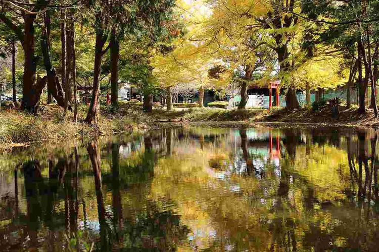Japan Pond Autumn No People Outdoors Park Water