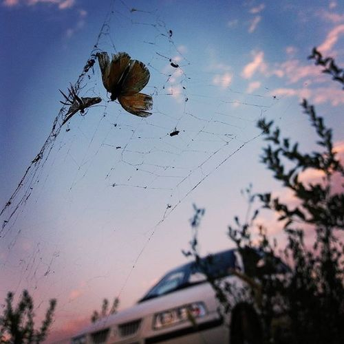 Animal Themes Boukanwestazerbayjan Close-up Day Insect Nature Outdoors Sky Spider
