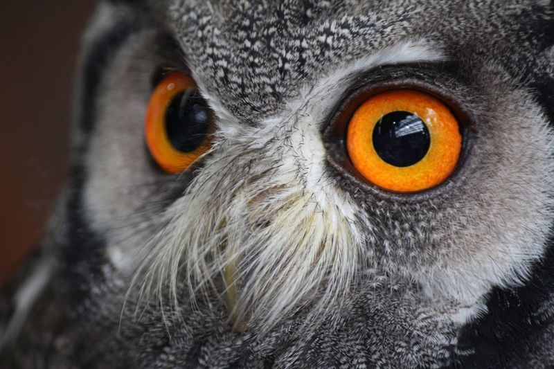 Eye one you❤️ 富士花鳥園 Eyes Bird One Animal Looking At Camera Animal Head  Portrait Animal Body Part Close-up Animal Themes Animal Eye Owl Nature Animal Wildlife