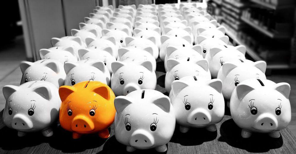 Beautifully Organized Piggybank No People Indoors  Sparschwein 🐷💰 Blackwhitecolour Yellow Pig Pigs Yellow Ones The Other One  Schwein Schweine