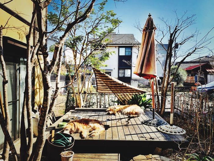Architecture Built Structure Building Exterior Building Plant Tree Day No People Residential District House Outdoors Seat Sunlight City Table Nature Hanging Wall - Building Feature Wall Sky