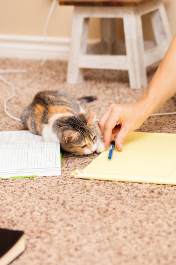 Candid shot of woman taking notes on the floor at home with calico kitten playing Flooring Animal Bedroom Calico Cat Candid Photography Care Carpet Cat Domestic Domestic Cat Feline Hand Holding Human Hand Indoors  Kitten Lifestyles Mammal One Animal One Person Pets Playing Real People Small Tricolor Cat