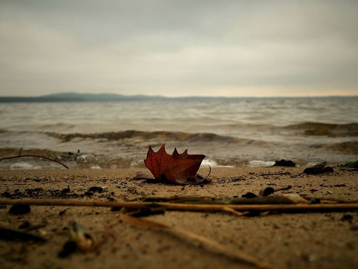 High Angle View Of Autumn Leaf On Beach By Sea Against Cloudy Sky