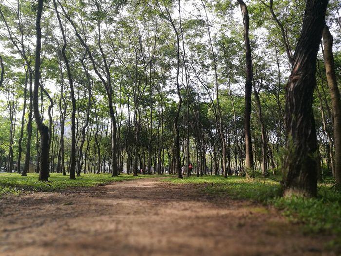 Tree Tree Area Forest Tree Trunk Lush - Description Rural Scene Sky Grass Landscape Treelined