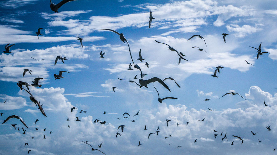 Flock Of Seagulls Flying Against Cloudy Sky