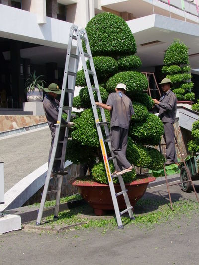 Topiary Trees City Composition Culture Day Full Frame Gardeners Green Colour Growth Ho Chi Minh City Ladders No Incidental People Outdoors Plant Potted Plant Reunification Palace Saigon Sunlight Three Men Topiary Tradition Trees Trimmingthetree Unusual Vietnam
