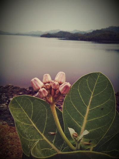 Nature Macro