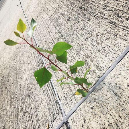 Leaf Plant Growth Bestrong Nevergiveup Vitality PalaPhoto Hungary Budapest Survivor Pioneer Nopainnogain