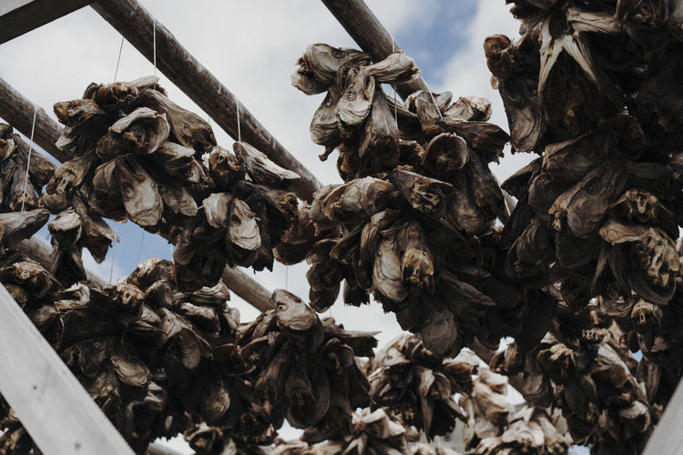 Low angle view of dried sculpture against sky