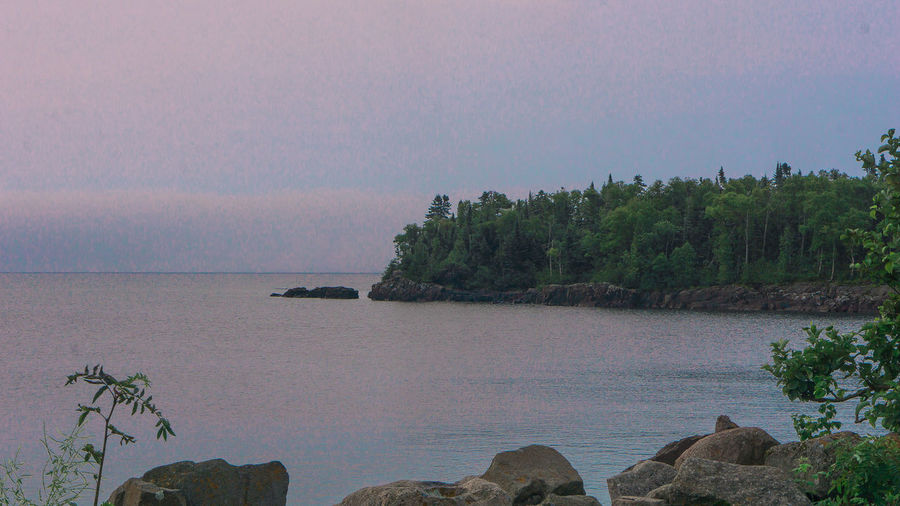 Tree Sea Water