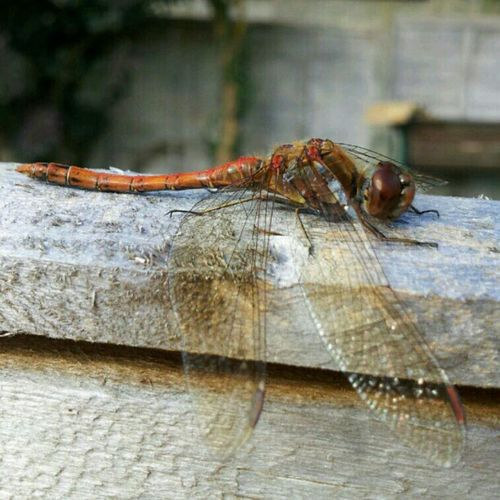 Relaxing Beautiful Dragonfly Insects