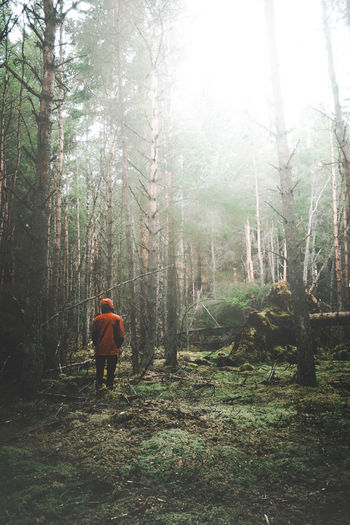 Rear view of a man walking in forest