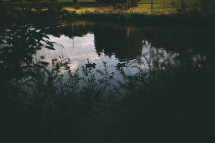Nature Lake Landscape Evening Warm Summer