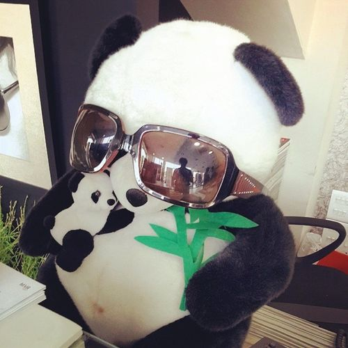 Cute Panda Bear I found today 😍 Travel Traveling Tagsforlikes Tflers Vacation Visiting Instatravel Instago Instagood Trip Holiday Photooftheday Fun Travelling Tourism Tourist Instapassport Instatraveling Mytravelgram Travelgram Travelingram Igtravel